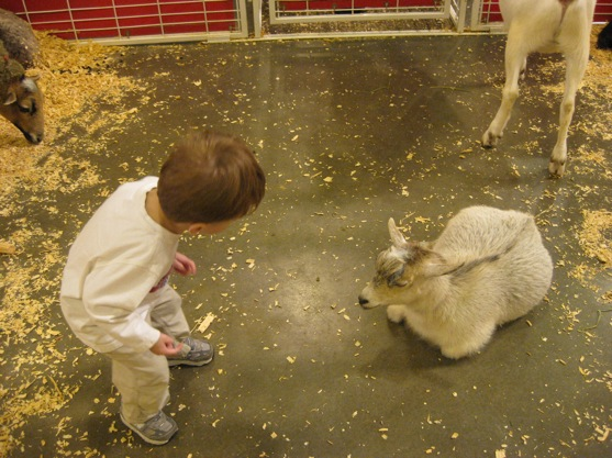 Rodeo Petting Zoo